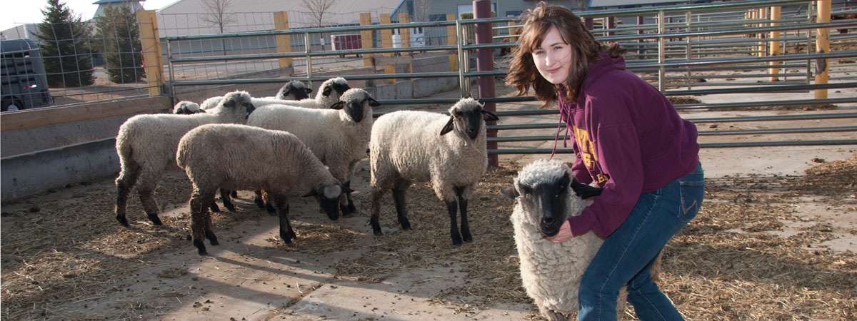 Student caught a sheep