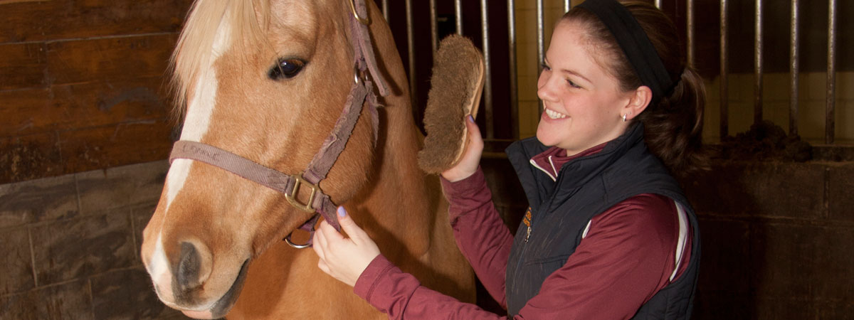 A student brushing a horse