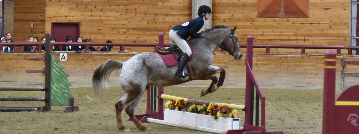 Equestrian Competition Show Jumping