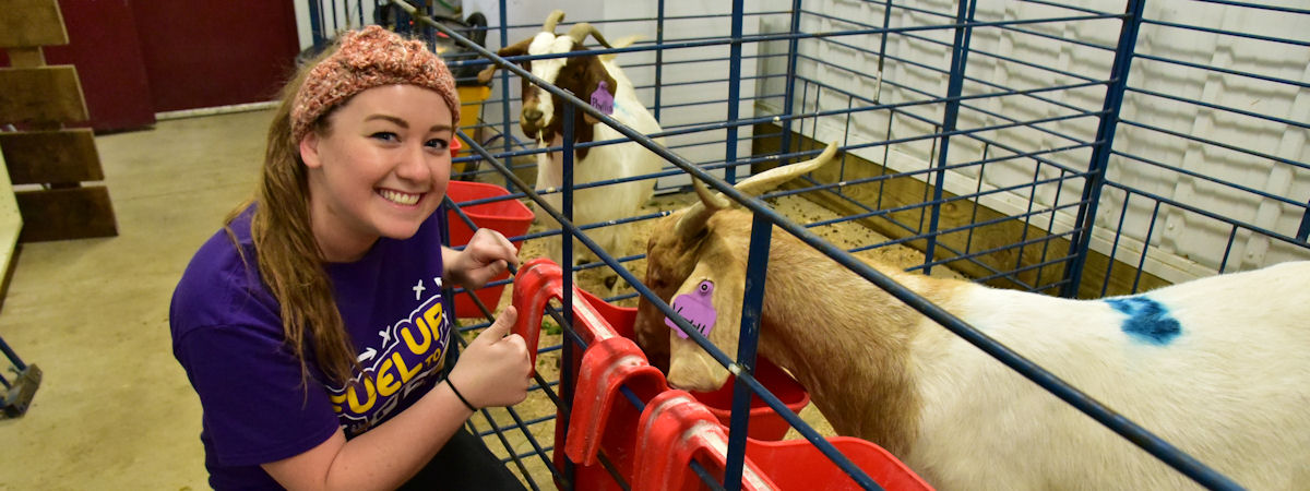 Student feeding goats as part of research project