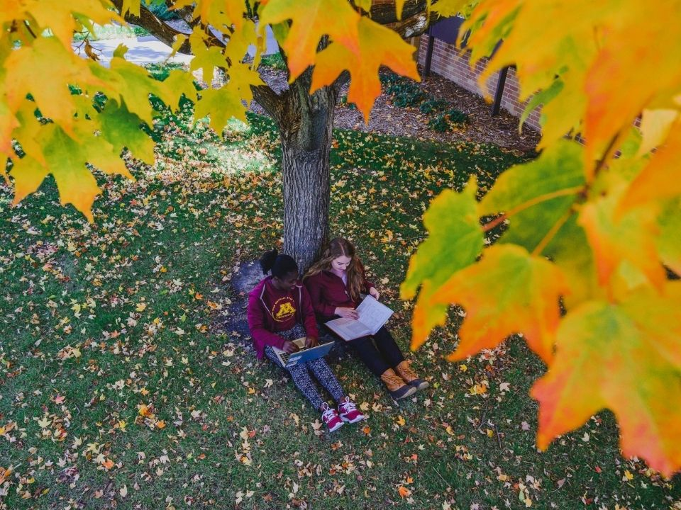 studying by tree