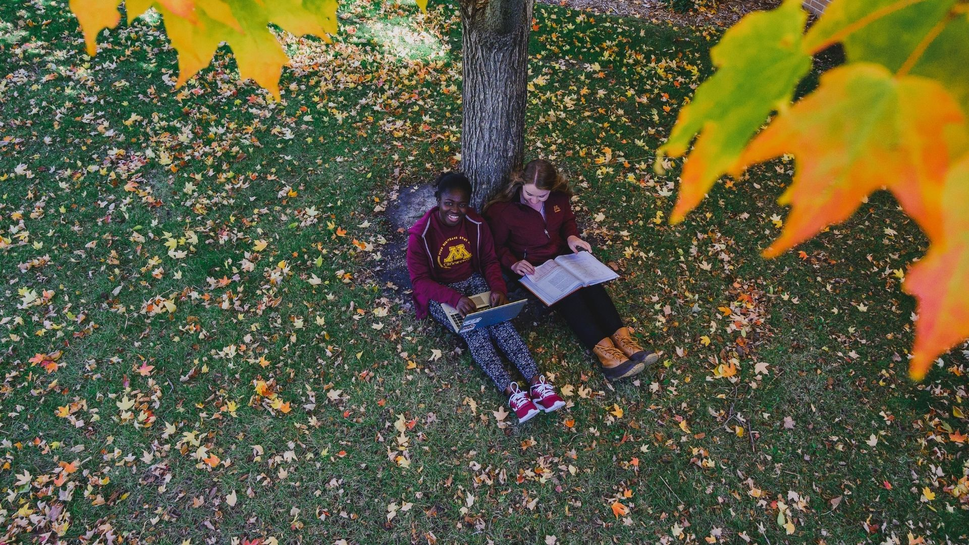 students sitting by tree