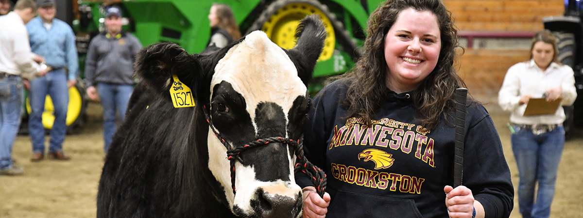 Student walking with a black and white cow at Ag Arama