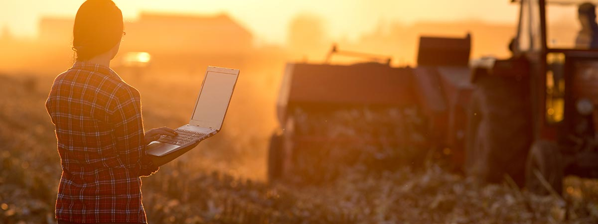 Woman with laptop in a field during dusk.