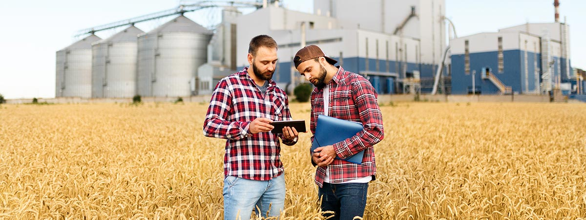 Two farmers stand in a wheat field with tablet. Agronomists discuss harvest and crops among ears of wheat with grain terminal elevator on background.