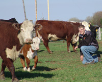 A farmer next to a herd of cows