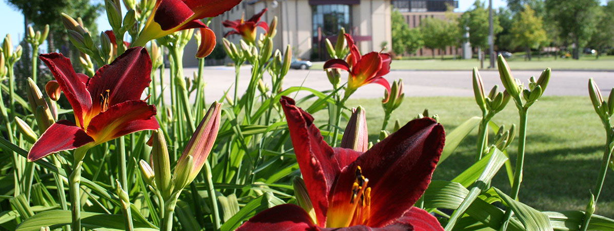 Maroon and gold flowers in front of Kiehle Building.