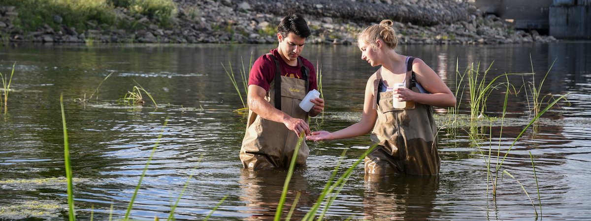 students collecting biological specimens in a river