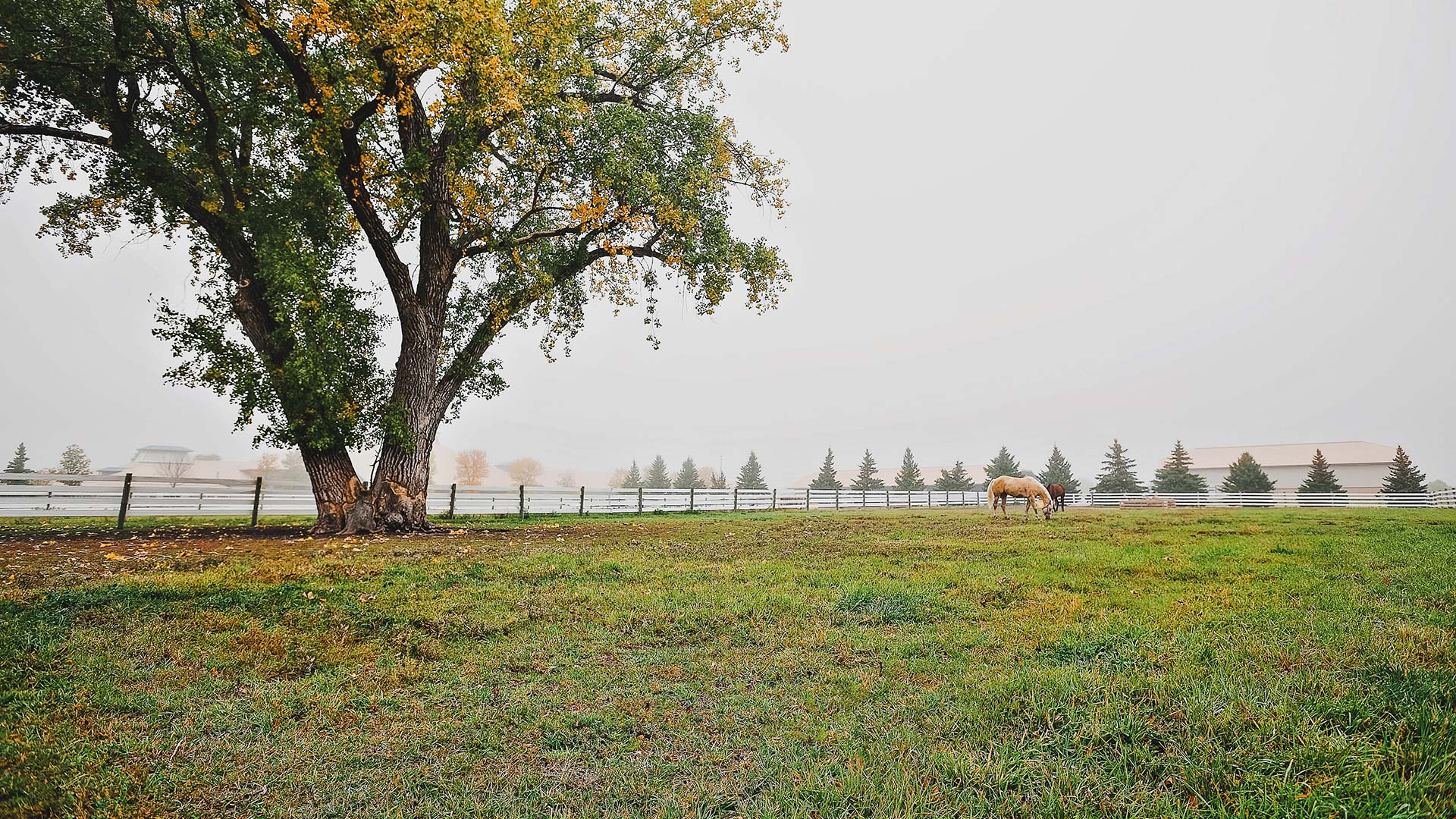 Horses in the pasture outside of the University Teaching and Outreach Center