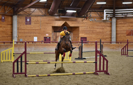 pini jumping in the arena