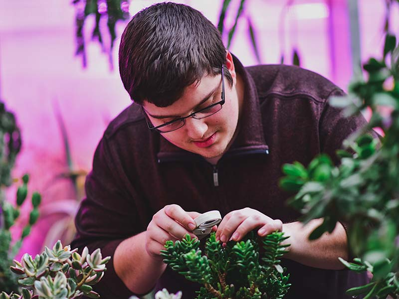 Caleb Rempel examining leaves of a plant in the UMC Greenhouse