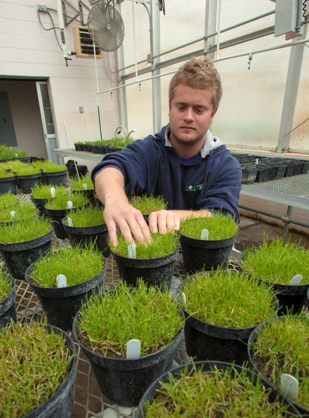 a student working with various turfgrass specimens