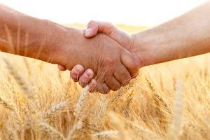 Handshake over a wheat field